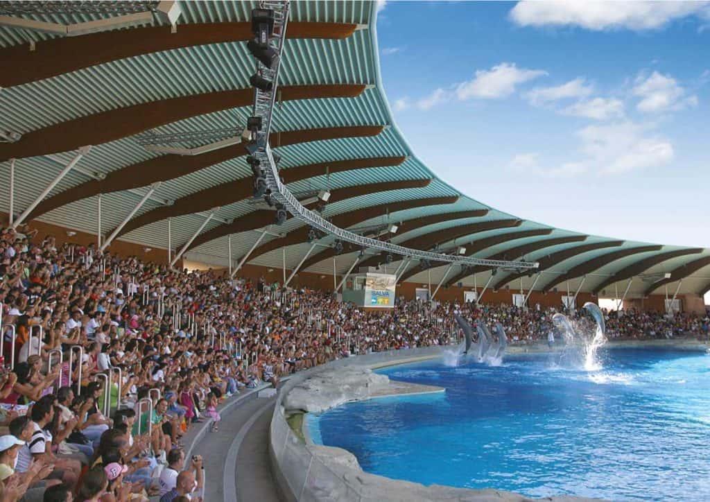 Spettacolo di delfini in piscina