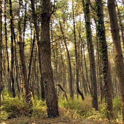 bosco di alberi
