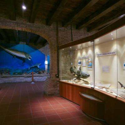 Sala interna del Muse Paleontologico di Mondaino